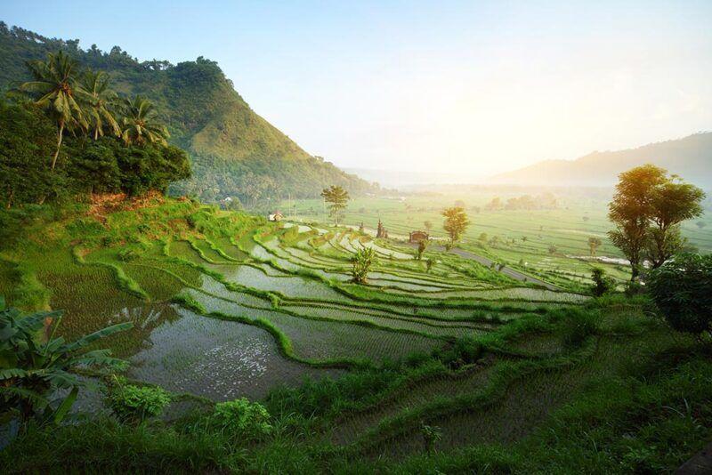 Quando visitare l'Indonesia - terrazze di riso