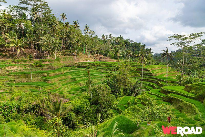 Viaggio a Bali terrazze di riso Jatiluwih