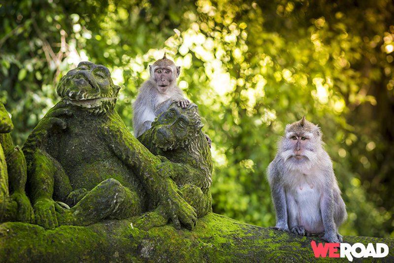 Indonesia tour - Ubud Sacred Monkey Forest