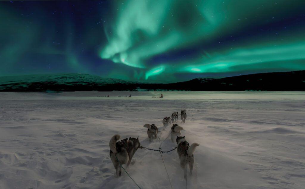 Aurora boreale quando: Norvegia cani da slitta