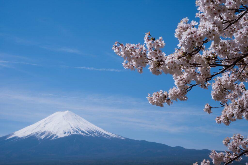 Fioritura dei ciliegi Monte Fuji