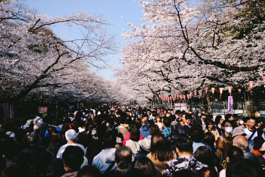 Hanami e turisti