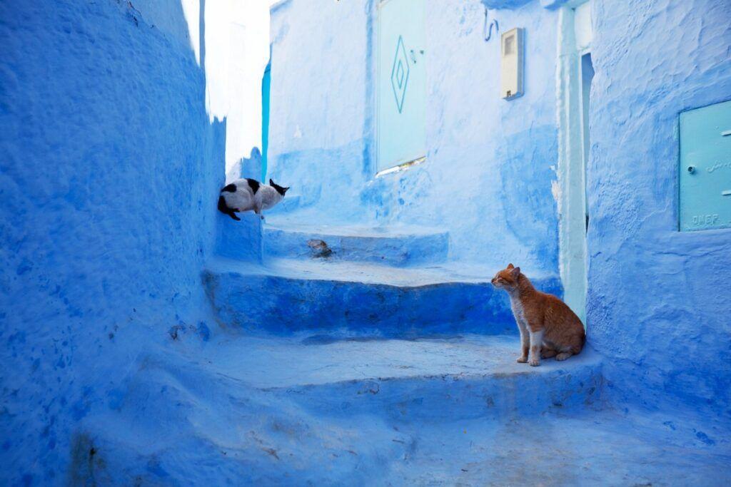 I veri abitanti di Chefchaouen: i gatti!